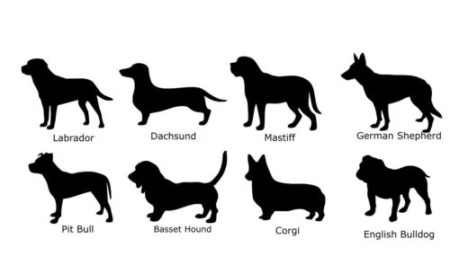 Dog Breed Choices